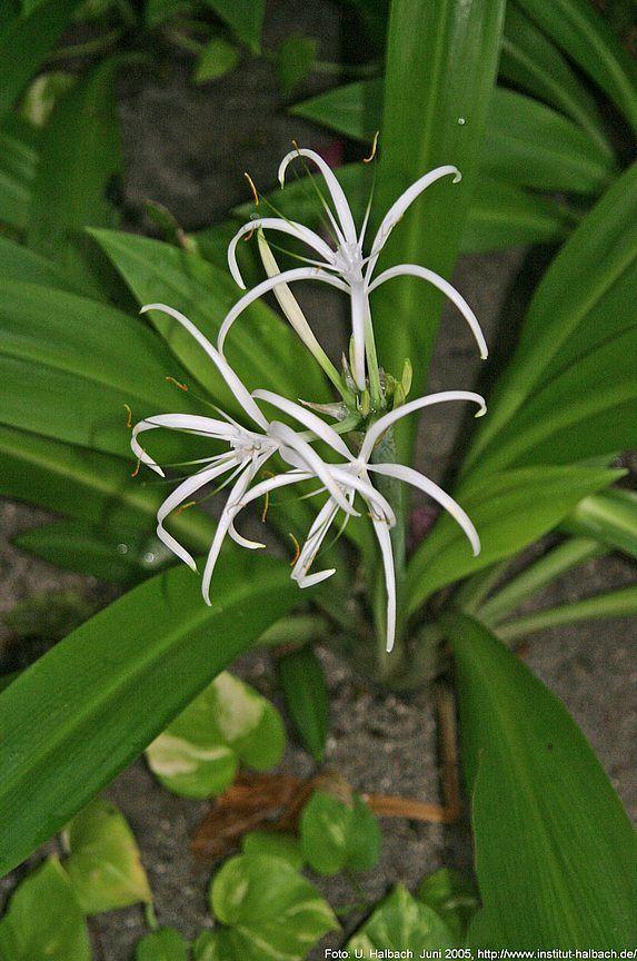 2005-Eriyadu-18