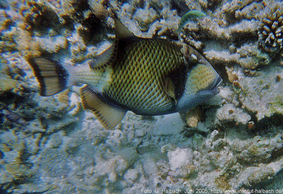 2005-Eriyadu-28