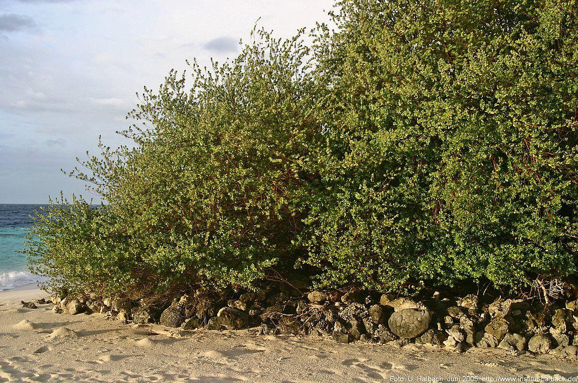 2005-Eriyadu-60