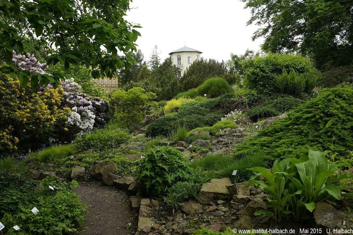 05 Botanischer Garten Halle (Saale)  .JPG