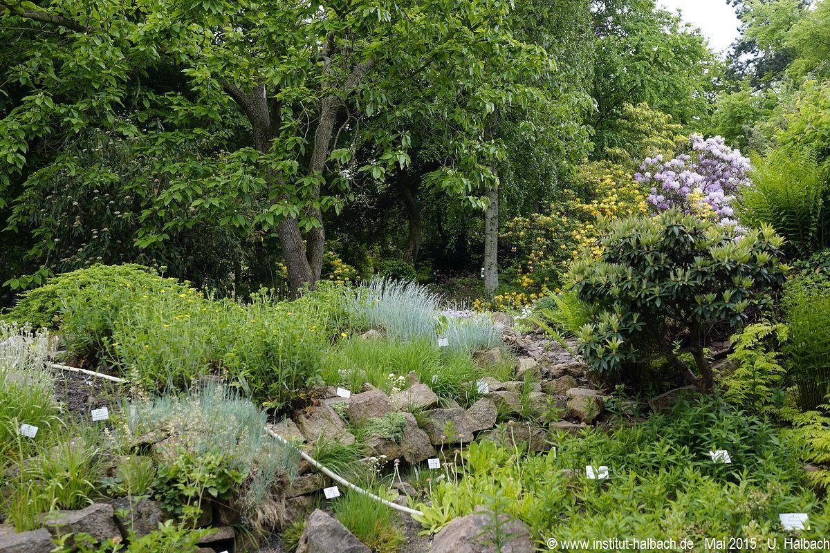 07 Botanischer Garten Halle (Saale)  .JPG