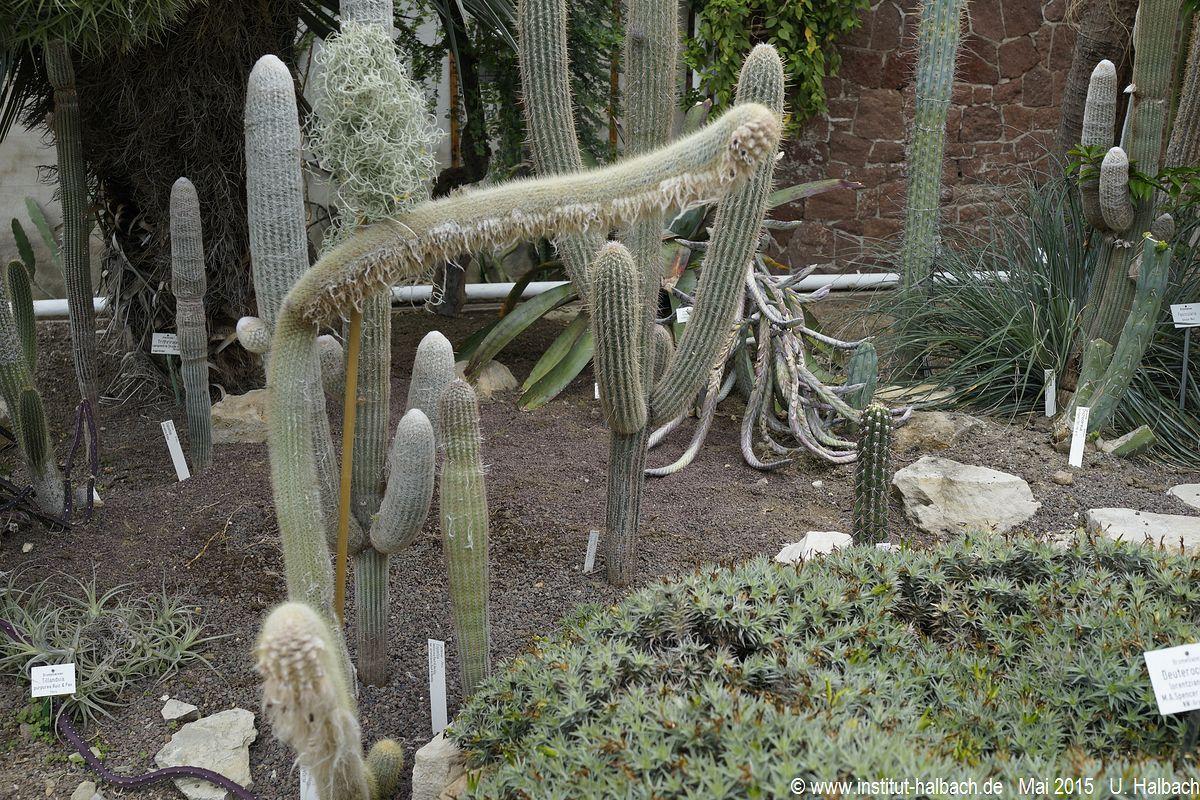 17 Botanischer Garten Halle (Saale)  .JPG