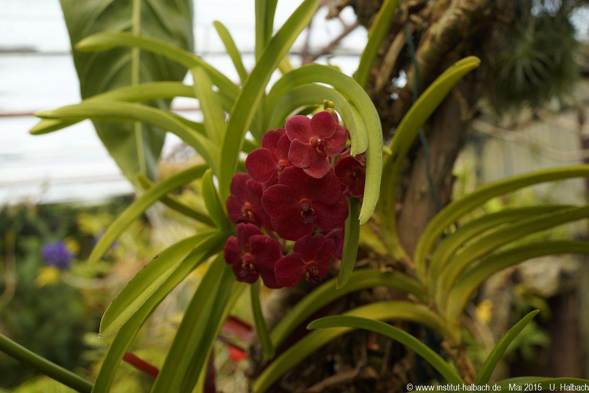 546-Madeira-2015_05_02