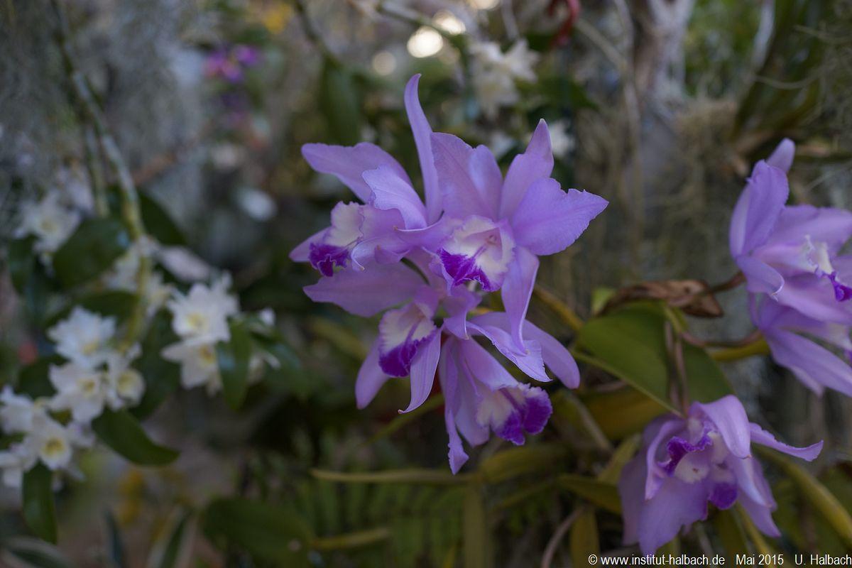 551-Madeira-2015_05_02