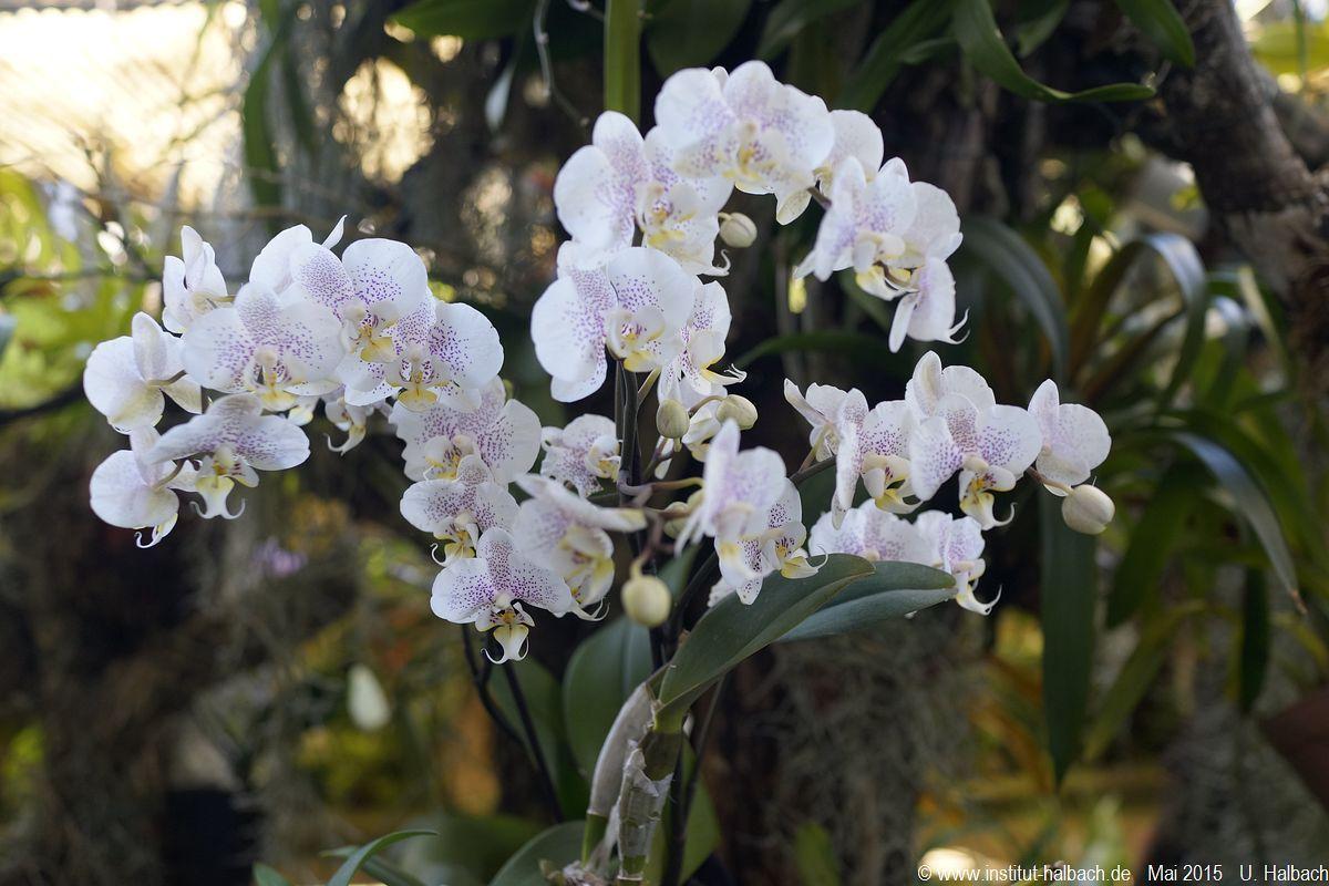 555-Madeira-2015_05_02