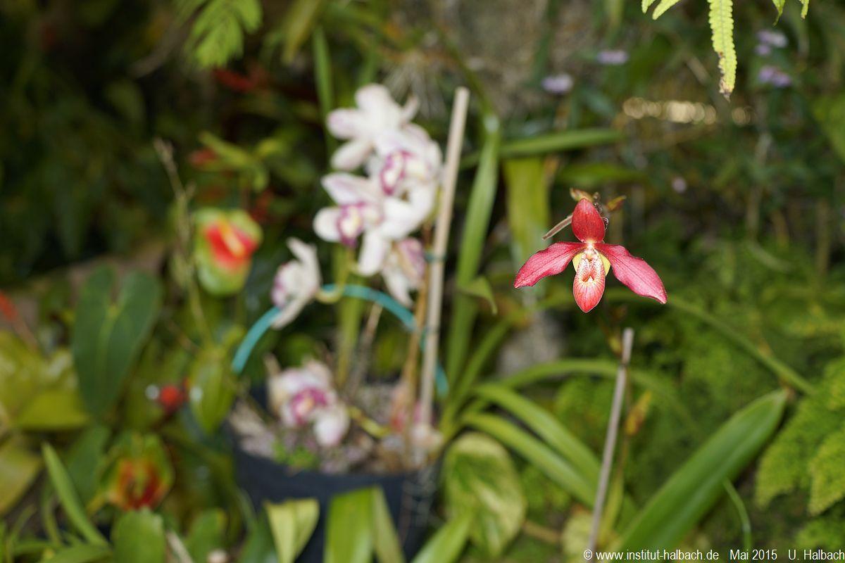 566-Madeira-2015_05_02