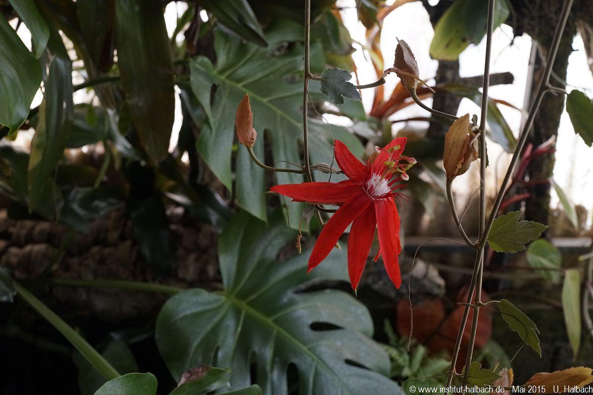 589-Madeira-2015_05_02