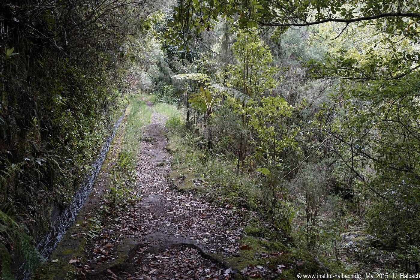 784 Madeira 2015_05_05