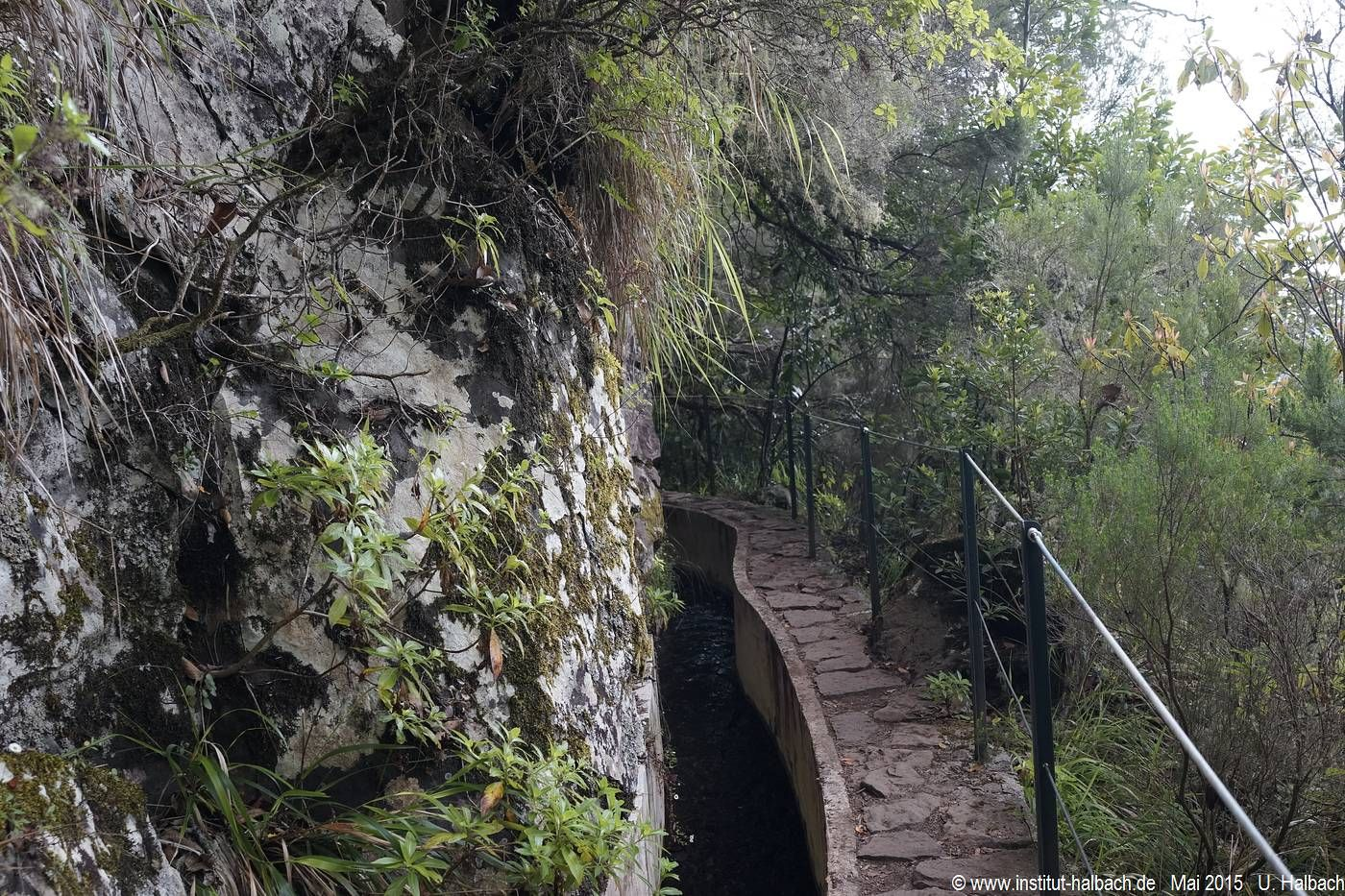 813 Madeira 2015_05_05