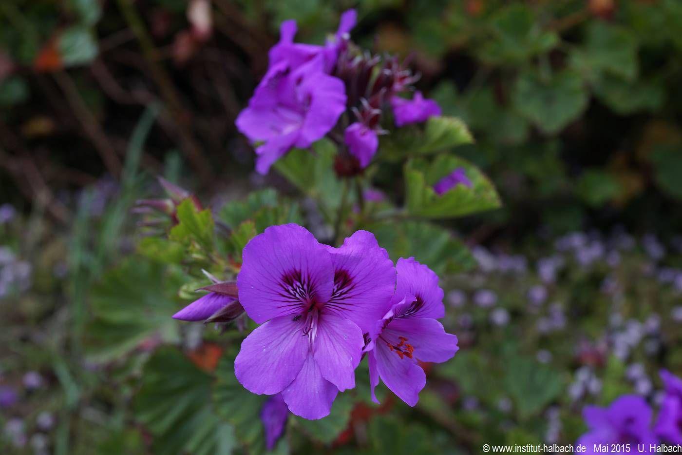 053 Madeira 2015_04_24