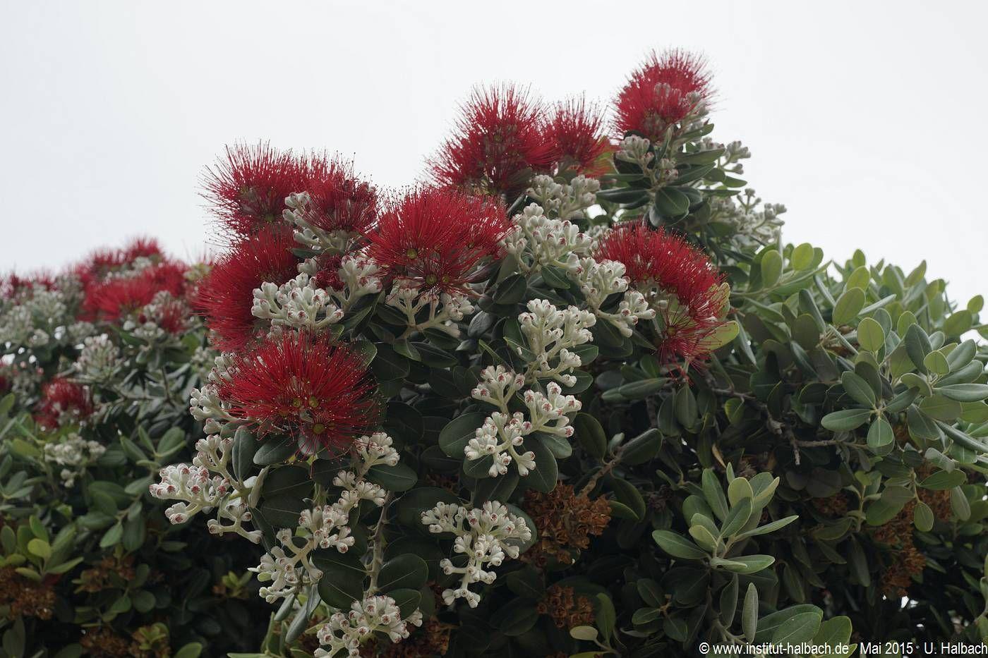 270 Madeira 2015_04_27