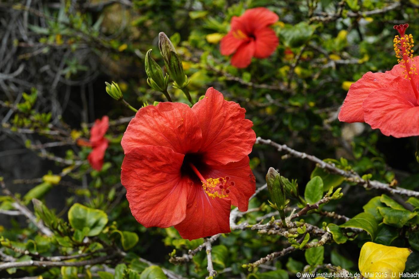 457 Madeira 2015_04_30