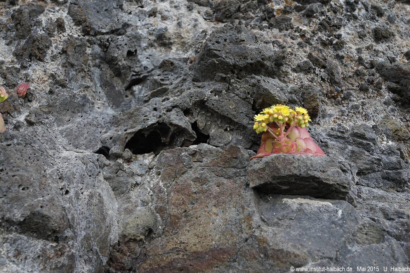 697 Madeira 2015_05_03