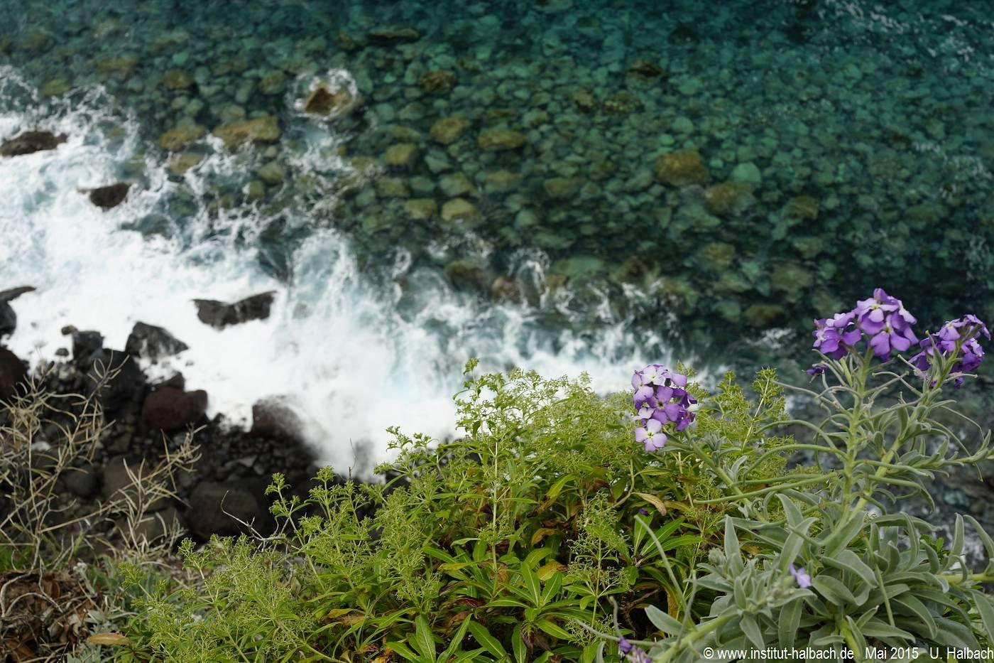 699 Madeira 2015_05_03