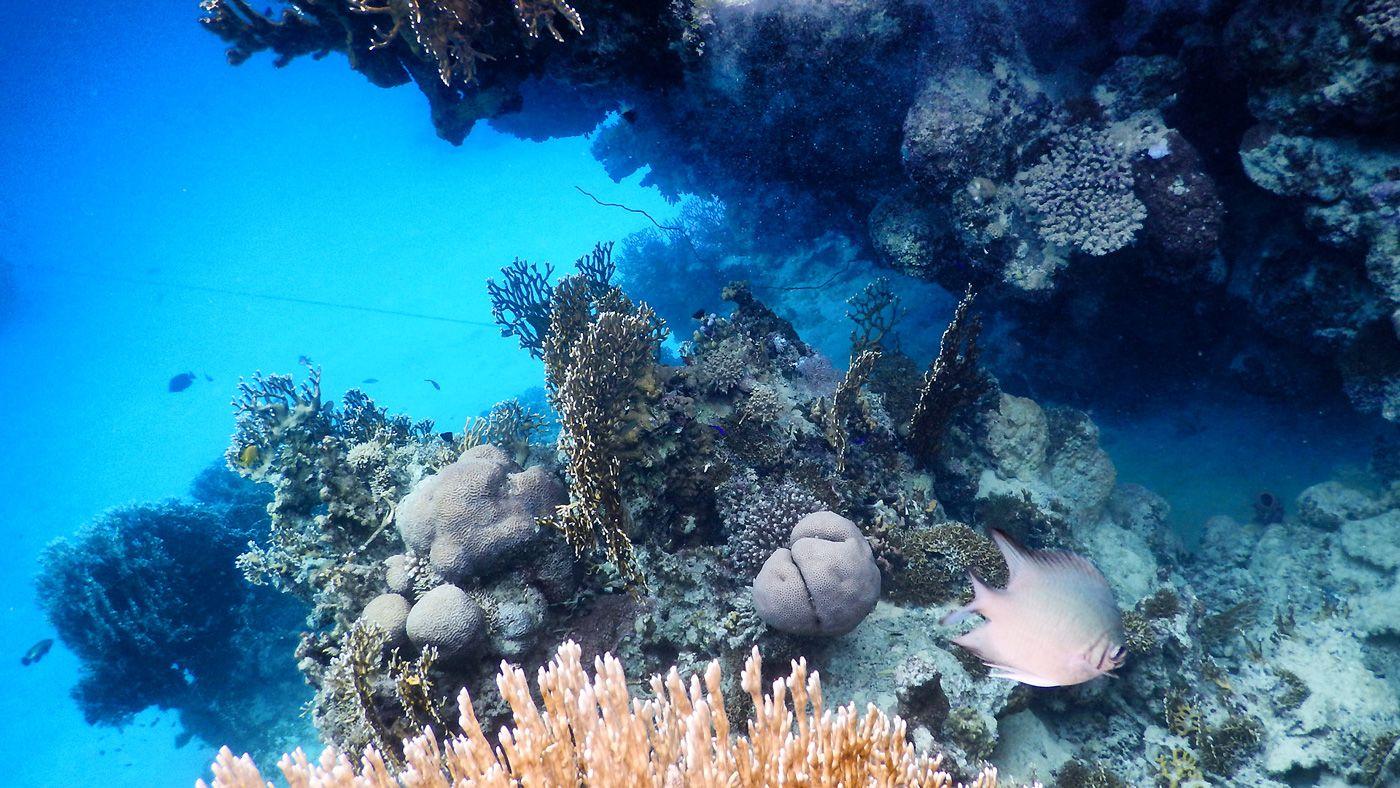 35 Rotes Meer Marsa Alam