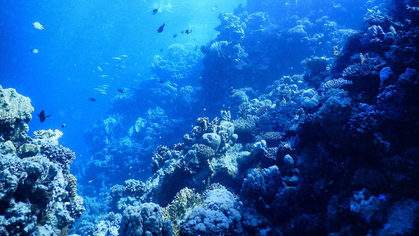 40 Rotes Meer Marsa Alam