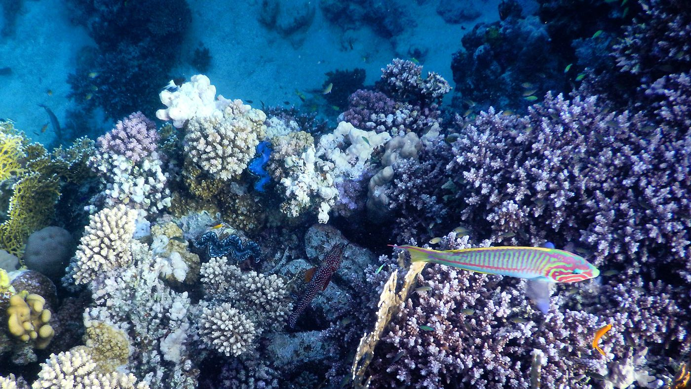 43 Rotes Meer Marsa Alam