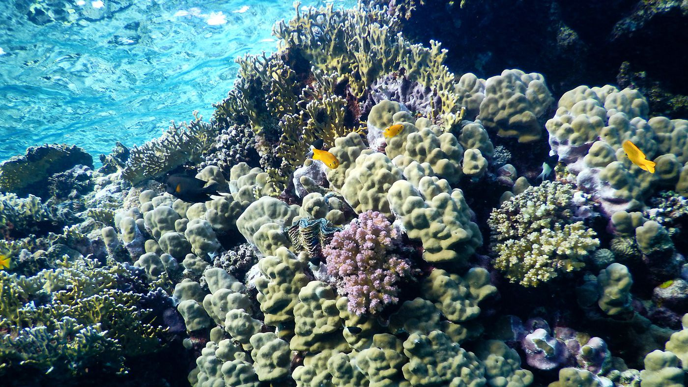 49 Rotes Meer Marsa Alam