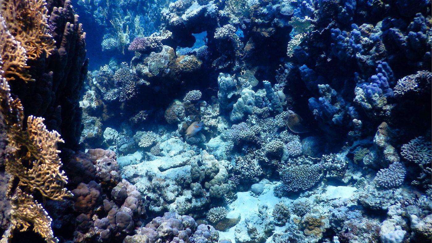 52 Rotes Meer Marsa Alam