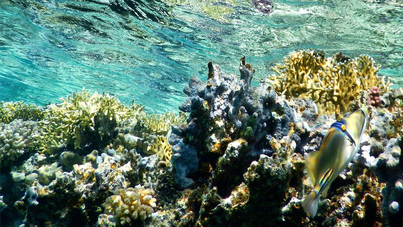 56 Rotes Meer Marsa Alam